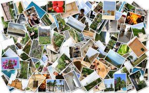 Facebook Avondvierdaagse foto's